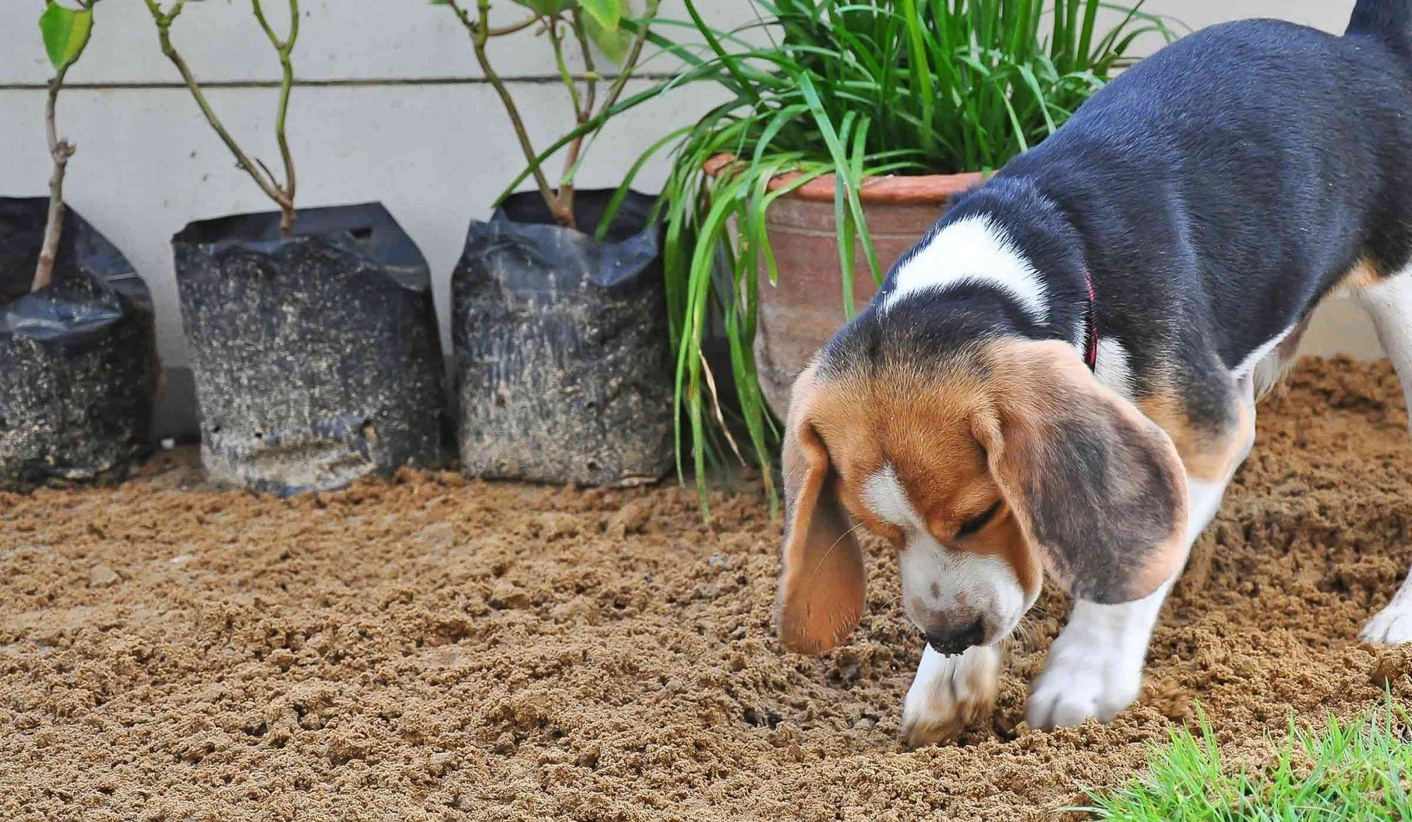 Dogs Burying Toys: Why Your Pet Hides Favorite Toys and Treats